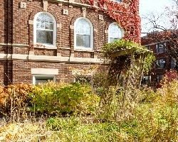 Brick building surrounded by weeds and overgrowth vegetation.