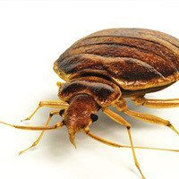 kill-bed-bugs-with-heat