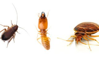 Beetle, Ant, and Bed Bug in a row on a white background.