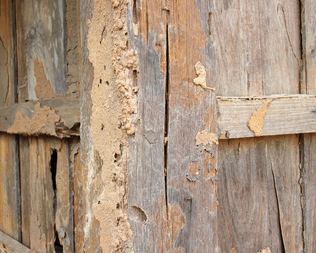 Houston Termite Control Termite Exterminator Holder S Pest Solutions