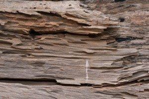 The Difference Between Termites And Wood Rot Holder S Pest Solutions