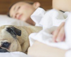 Woman sleeping with pug on the bed.