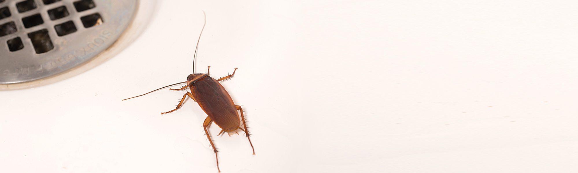 Cockroach-control-3.jpg