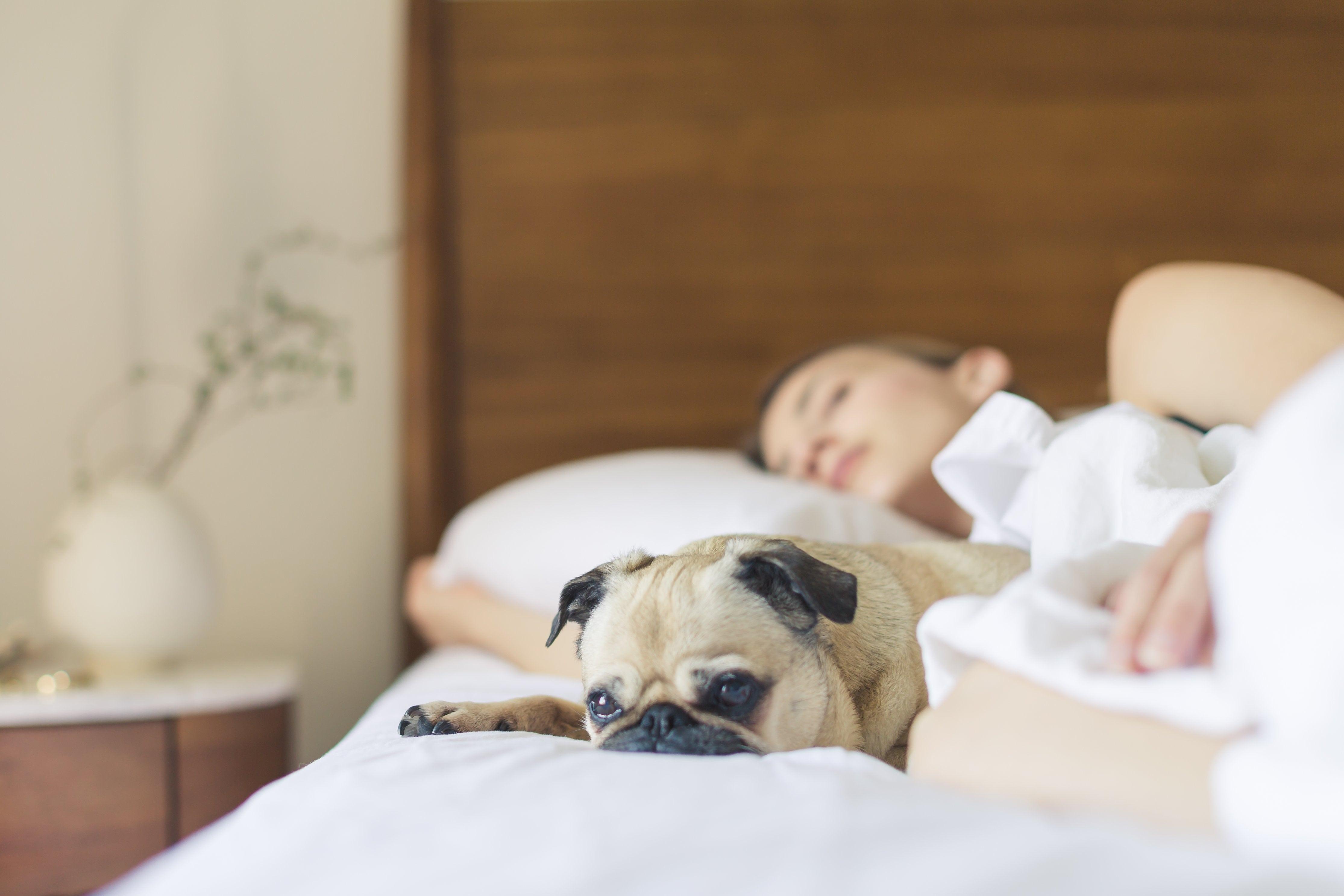 Bed Bug Exterminator Houston Holder S Pest Solutions