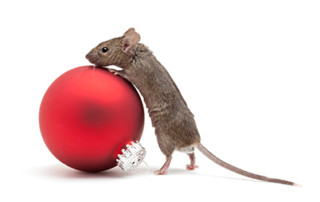 Mouse climbing on ornament